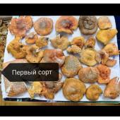 Красный мухомор сушеный, amanita muskaria, 1 сорт 100 грамм в вакууме.